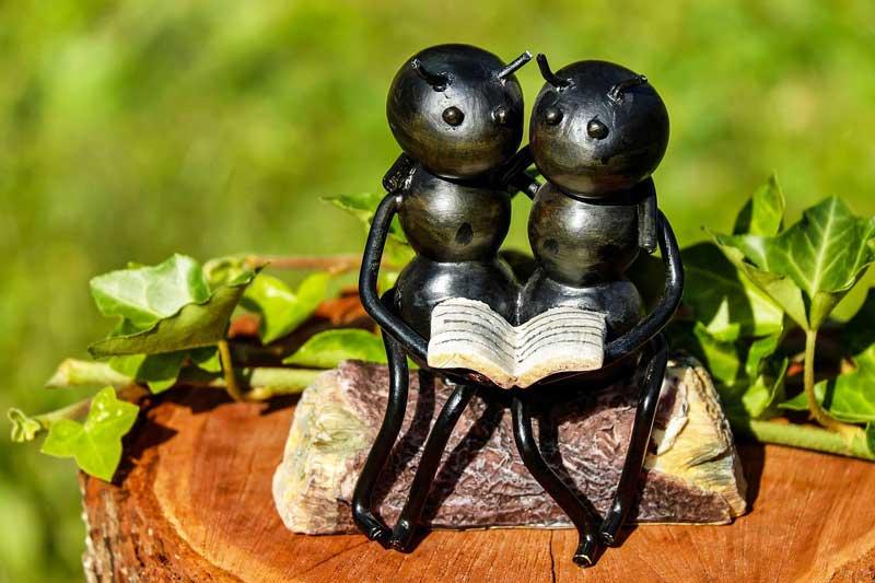蟻エキスの効果・効能 | 精力剤・滋養強壮剤の原料