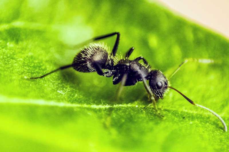 蟻エキスに含まれる成分