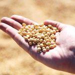 ソイポリア(ポリアミン)の効果・効能 | 精力剤・滋養強壮剤の原料
