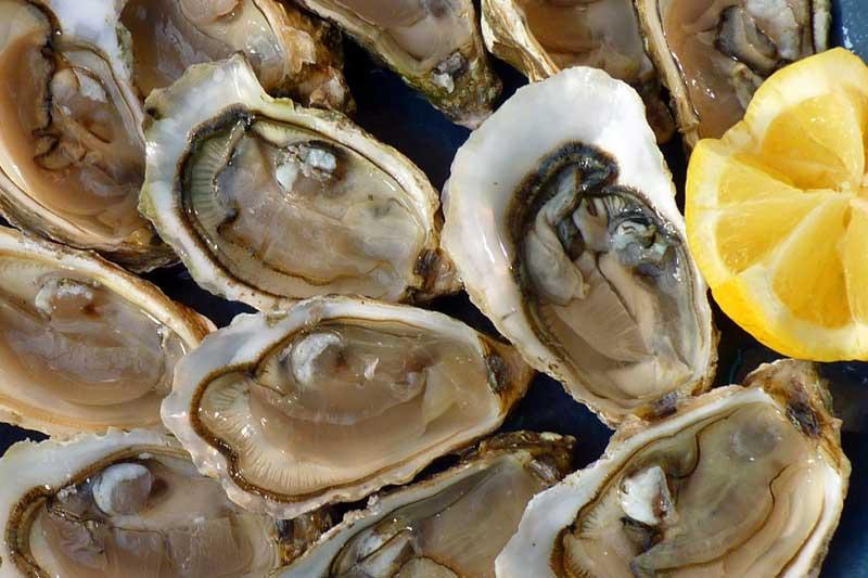 牡蠣エキスの効果・効能 | 精力剤・滋養強壮剤の原料