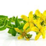 セントジョーンズワート(セイヨウオトギリ)の効果・効能 | 精力剤・滋養強壮剤の原料